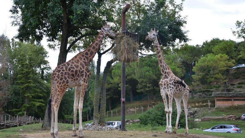 Жирафы в сафари-парке озера Гарда - Натура-Вива