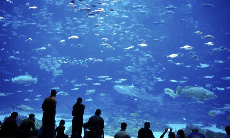 Аквариум в Генуе - второй по величине во всей Европе