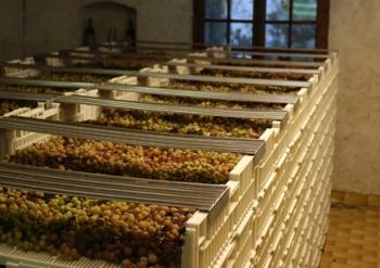 Игристое вино Мартини Асти не шампанское, потому что производится немного иначе