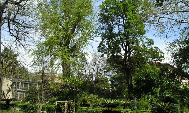 Ботанический сад в городе Пизе