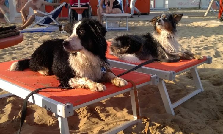 Собачий пляж Плуто в Бибионе
