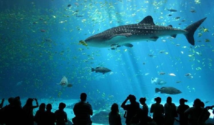 Огромный Аквариум в Генуе - описание развлечений и шоу-программ
