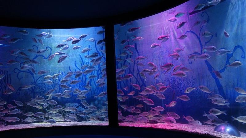 Фото внутри океанариума в Лидо ди Езоло