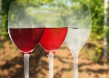 Ламбруско это шампанское или игристое вино