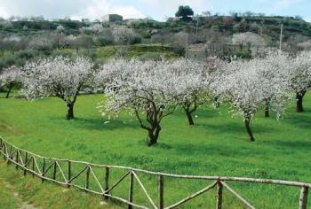 Цветущие сады в Сицилии весной