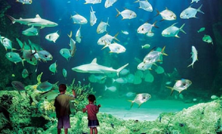 Крупнейший океанариум Европы - Аквариум в итальянском городе Генуя