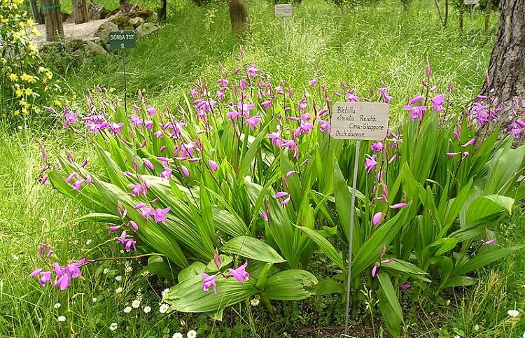 Ботанический сад Падуи и описание некоторых видов растений