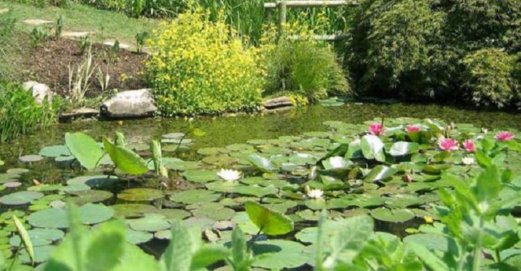 История создания Ботанического сада в Падуе - интересные факты