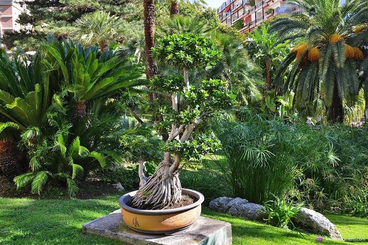 Ботанический сад Кальяри - время работы и стоимость билетов